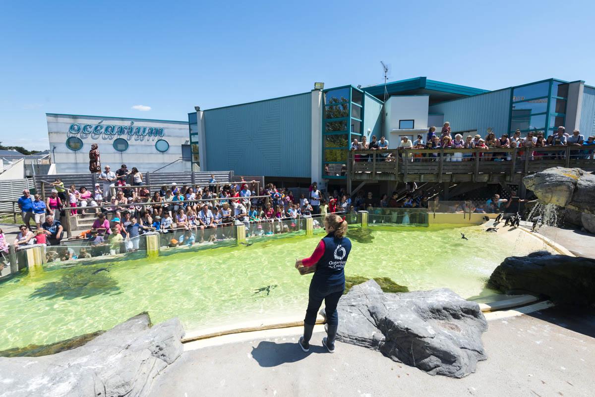 photo de l'ocearium du Croisic, nourrissage des manchots