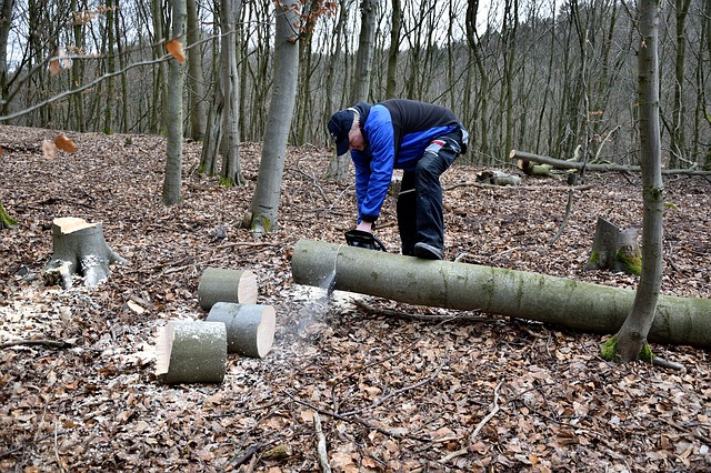 lumberjack-2146515_640