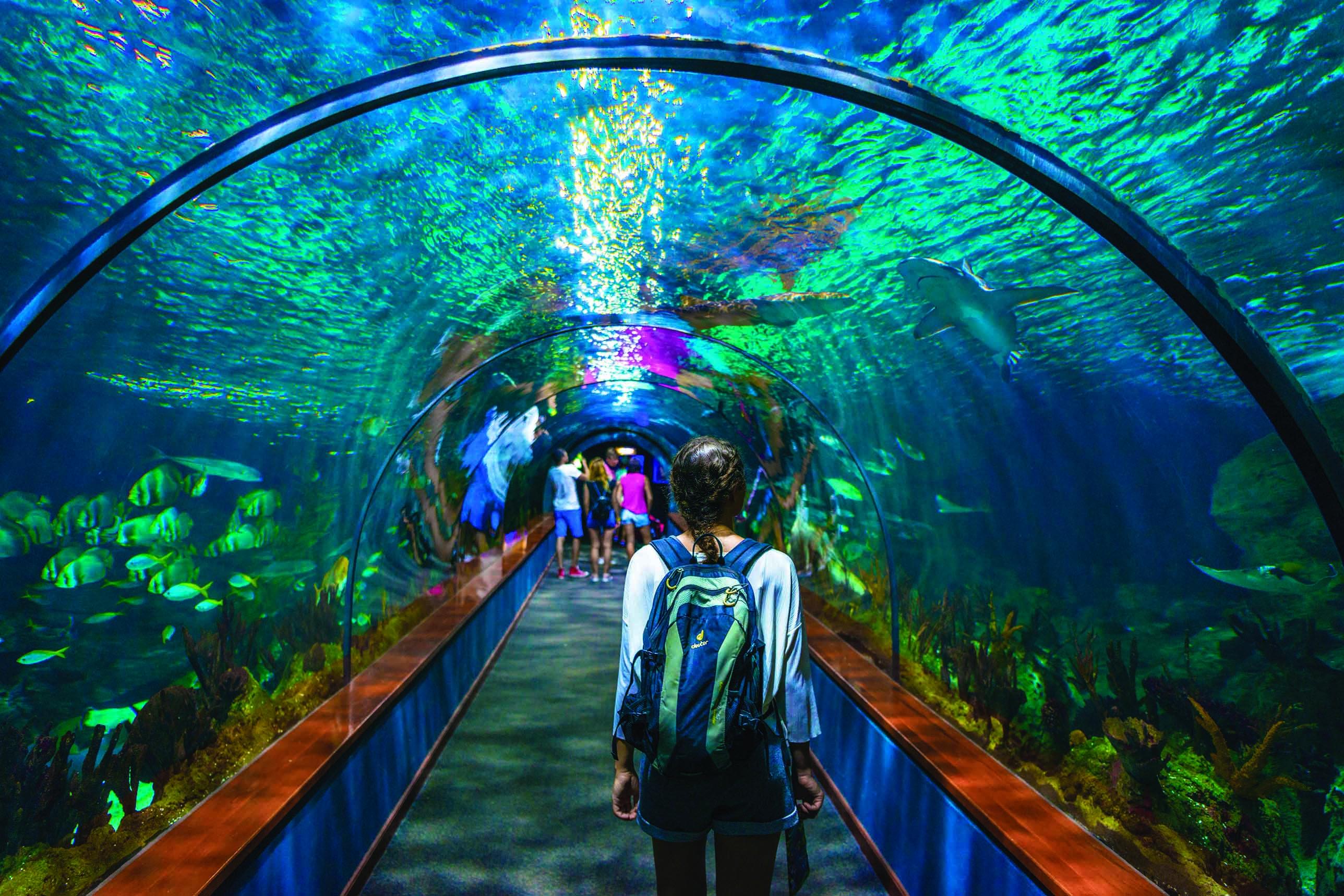 Young woman, visitor in aquarium tunnel, tunnel under aquarium, Loro Parque, Loro Park, Puerto de la Cruz, Tenerife, Canary Islands, Spain, Europe