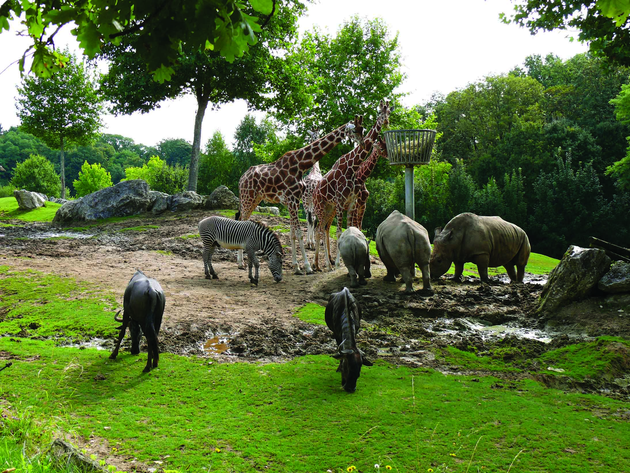Zoo-Parc-de-Beauval-France-Savana-Animals